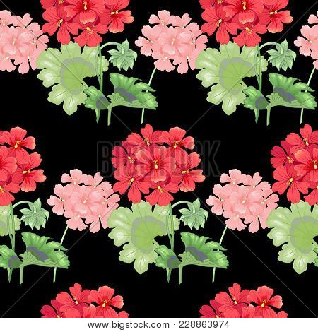 Black Background With Geranium Flowers. Seamless Pattern. Illustration Victorian Style. Vintage. Vec