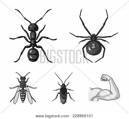Spider, Ant, Wasp, Bee .insects Set Collection Icons In Monochrome Style Vector Symbol Stock Illustr