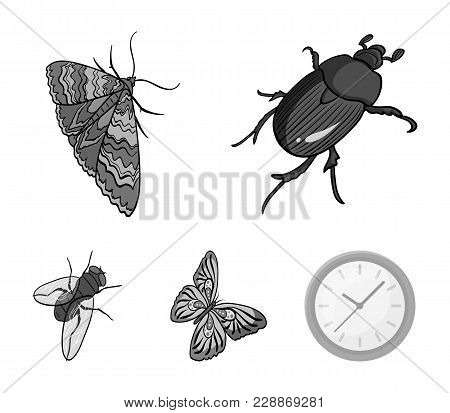 Arthropods Insect Beetle, Moth, Butterfly, Fly. Insects Set Collection Icons In Monochrome Style Vec