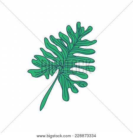 Random Lobed Tropical Leaf Hand Drawn Vector Illustration Design