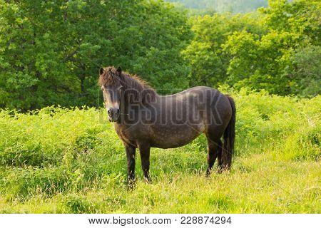 Wild Pony Quantock Hills Somerset England Uk Countryside Views