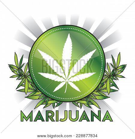 Metallic Green Cannabis Marijuana Leaf Badge Design Vector