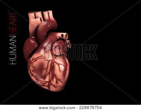 3d Illustration Of Human Heart Anatomy. Organs Symbol. Isolated Black.