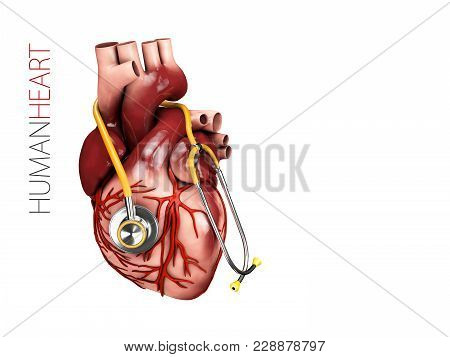 Human Heart Anatomy With Stethoscope. Organs Symbol. 3d Illustration Isolated On White Background.