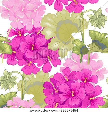 White Background With Geranium Flowers. Seamless Pattern. Illustration Victorian Style. Vintage. Vec