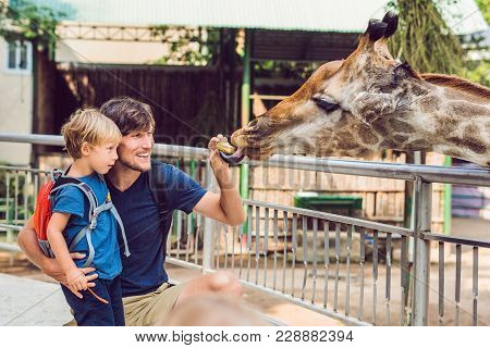 Father And Son Watching And Feeding Giraffe In Zoo. Happy Kid Having Fun With Animals Safari Park On