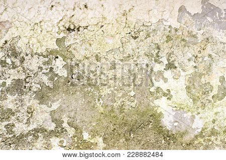 Mold On The Wall. Many Different Dirty Spots.