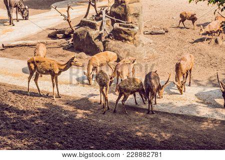 Deer Eat In A Zoo Safari In The Summer Noon.