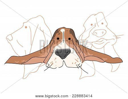 Vector Illustration Funny Dog Thoroughbred On A White Background. Drawing Of Basset Hound.