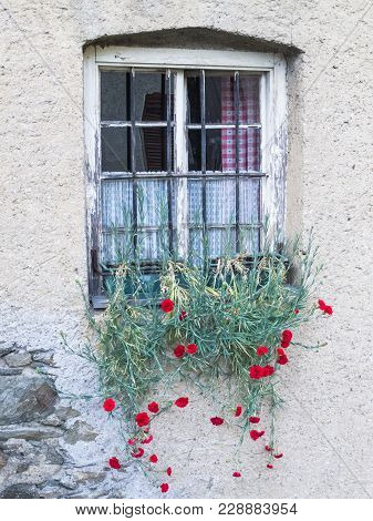 Carnations Hanging Out Of The Pots On The Outer Sill Of An Old Rural Window, At San Pancrazio, South