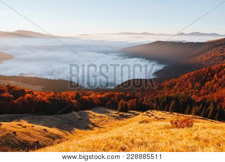 Awesome morning moment in alpine foggy valley. Location Carpathian national park, Ukraine, Europe. Scenic image of wilderness, ecology concept. Drone photography. Explore the beauty of earth.