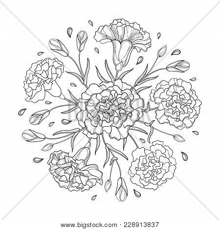 Vector Round Composition With Outline Carnation Or Clove. Flower Bunch, Bud And Leaves In Black Isol