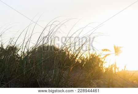 A Unique Perspective Of  Grassy Sand Dunes And A Palm Tree On The Beach. The Setting Sun Adds Charac