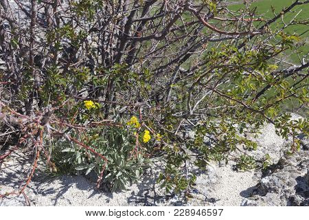 Beautiful Spring Composition. The Background With Yellow Flowers And The Shrub.