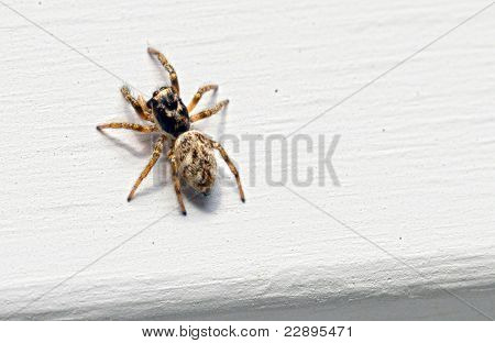 Spider on house