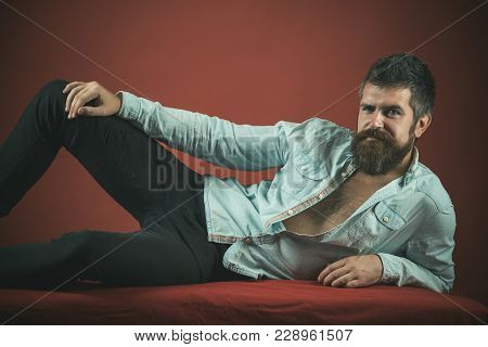 Man With Beard And Mustache Lays With Unbuttoned Denim Shirt On Burgundy Background. Macho Looks Hot