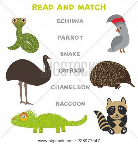Kids Words Learning Game Worksheet Read And Match. Funny Animals Ostrich Parrot Snake Echidna Raccoo