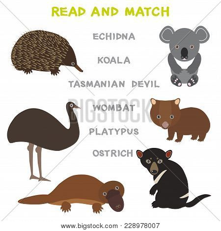 Kids Words Learning Game Worksheet Read And Match. Funny Animals Ostrich Echidna Platypus Koala Womb