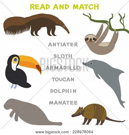 Kids Words Learning Game Worksheet Read And Match. Funny Animals Armadillo Anteater Sloth Toucan Dol