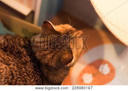 tabby cat using heating radiator at home