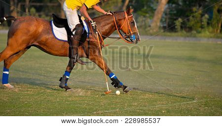 Horse Polo Player Use Mallet Hit Polo Ball On Sunset Match.