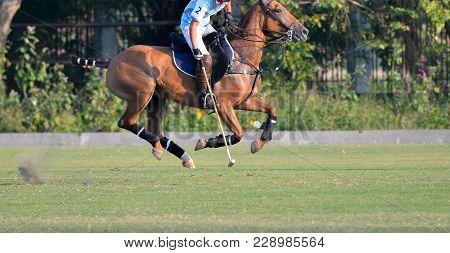 Horse Polo Players Ride, Use Mallet Hit A Polo Ball.