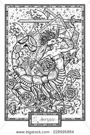 Zodiac Sign Scorpio Or Scorpion With Carnation Flower And Lucky Numbers. Hand Drawn Fantasy Graphic