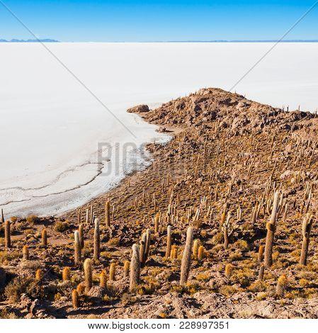 View Of Cactus Covering Isla Del Pescado Fish Island With The Uyuni Salt Flat In Bolivia
