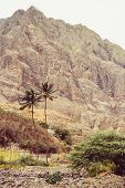 Palms trees in arid stony terrain. Huge barren mountain rising on the background. Santo Antao Island, Cape Verde. poster