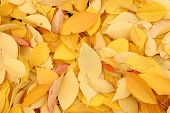 details beautiful autumn leaves over the ground poster