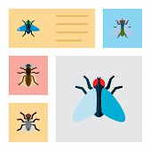 Icon flat buzz set of mosquito, bluebottle, buzz and other vector objects. Also includes fly, gnat, hum elements. poster