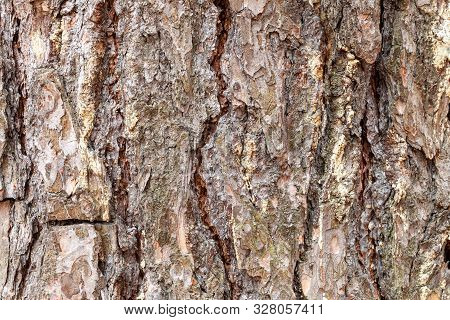 Natural Texture - Grooved Bark On Mature Trunk Of Pine Tree Close Up