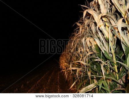 View From Tractor Seat Harvesting Corn For Silage Late At Night With Headlights Shining On Stalks -