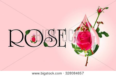 Blooming Rose In A Drop On A Pink Background