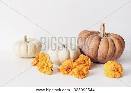 Autumn Still Life Scene With Marigold, Tagetes Flowers And Orange, White Pumpkins On Table Backgroun