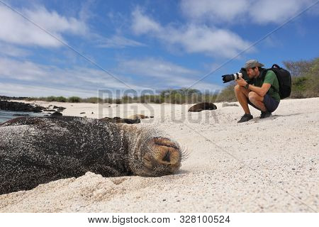 Galapagos Animal wildlife nature photographer tourist photographing Galapagos Sea Lion in sand lying on beach on Gardner Bay Beach, Espanola Island, Galapagos Islands, Ecuador, South America.
