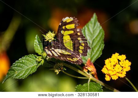 Close Up Of A Green And Black Butterfly With Small Flowers