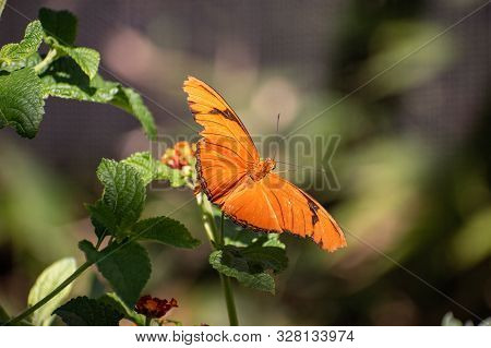 Detail Of An Orange Butterfly Sitting On A Green Plant
