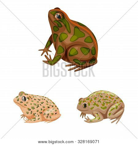 Vector Illustration Of Frog And Anuran Sign. Collection Of Frog And Animal Vector Icon For Stock.