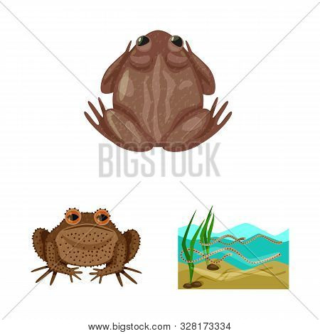 Vector illustration of frog and anuran sign. Set of frog and animal stock symbol for web. poster