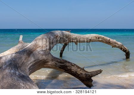 Havelock Island Beach, Andamans, India. Fallen Tree Near The Ocean. Seascape With The Big Old Tree.