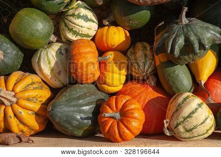 Mix Of Ripe Green, Orange, Yellow Pumpkins, Squash And Gourds With Different Varieties And Shapes Fr