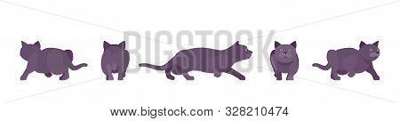 Black Cat Sneaking. Active Healthy Kitten With Dark, Gray Colored Fur, Cute Funny Pet, Mystic Bad Lu