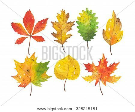 Watercolor Hand Drawn Set Of Autumn Leaves Of Different Types Of Trees. Bright And Colorful Forest E
