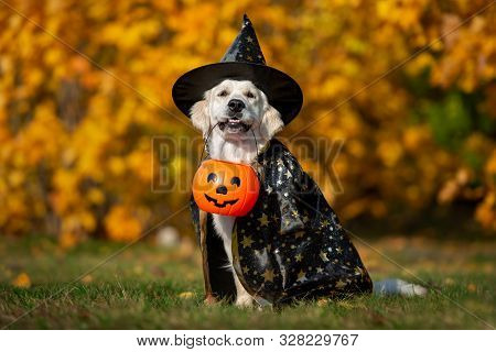 Golden Retriever Dog Posing For Halloween In A Costume