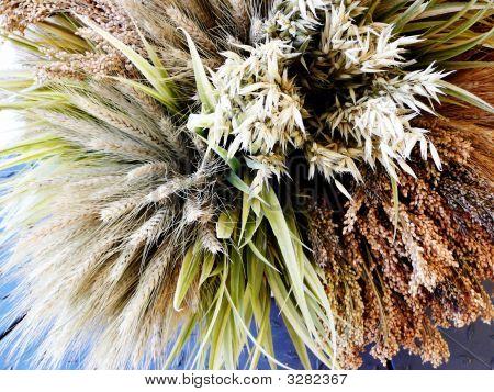 Bouquet Of Grains