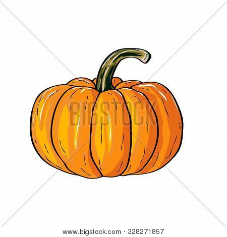 Autumn Pumpkin Vegetable Design. Pumpkin Oriental Bittersweet Vector Illustration. Orange Halloween