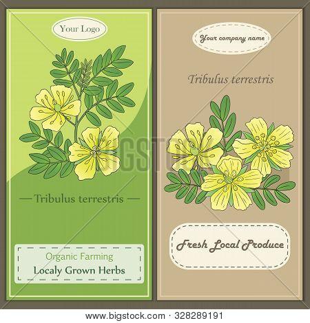 Medicinal Herbs Collection. Vector Hand Drawn Illustration Of A Plant Tribulus Terrestris. Flyer Tem