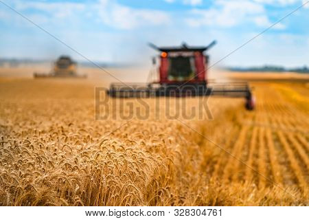 Corn In Field Closeup. Red Grain Harvesting Combine In A Sunny Day In A Blurred Background . Yellow