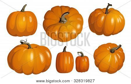 Orange Pumpkin Isolated On White. Realistic Vector Pumpkins. Set Of Orange Pumpkins For Halloween An